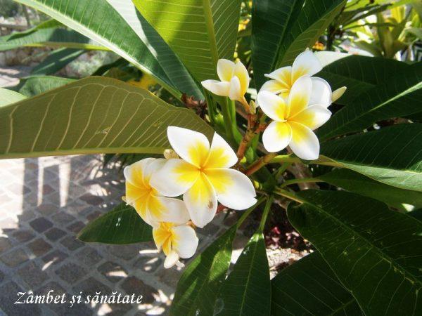 flori-exotice-gradina-botanica-zurich.