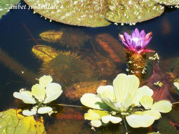 gradina-botanica-zurich-bazin-cu-flori
