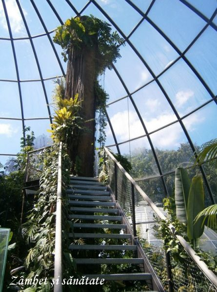 gradina-botanica-zurich-copac