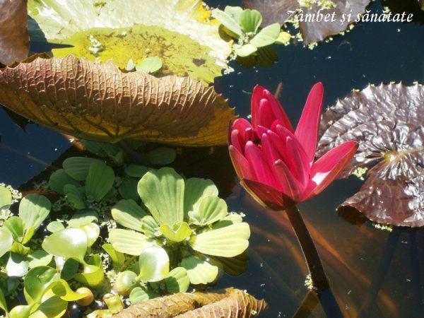 gradina-botanica-zurich-flori