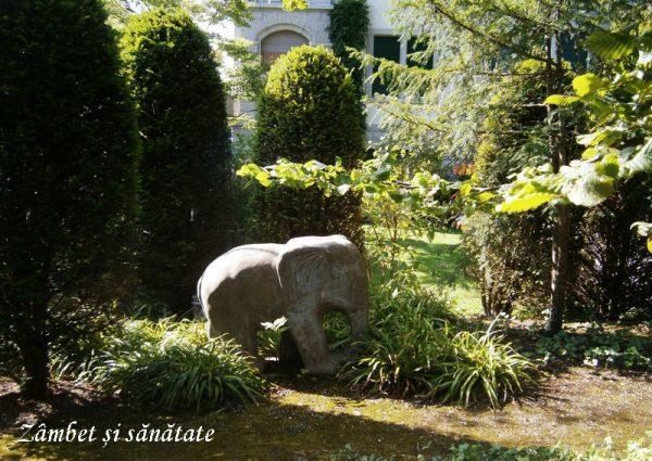 zurich-elefant-de-gradina