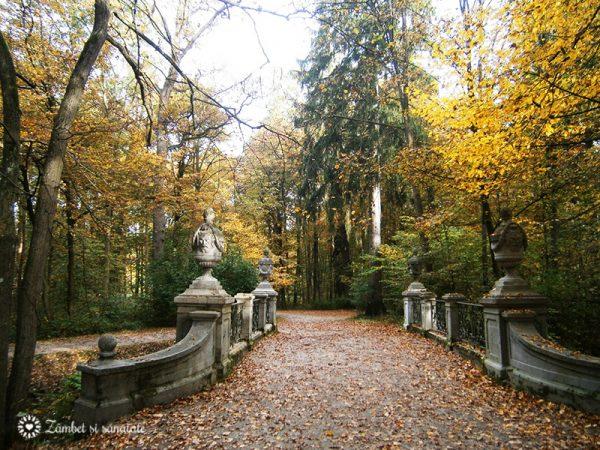 toamna-in-parc-cu-frunze-galbene