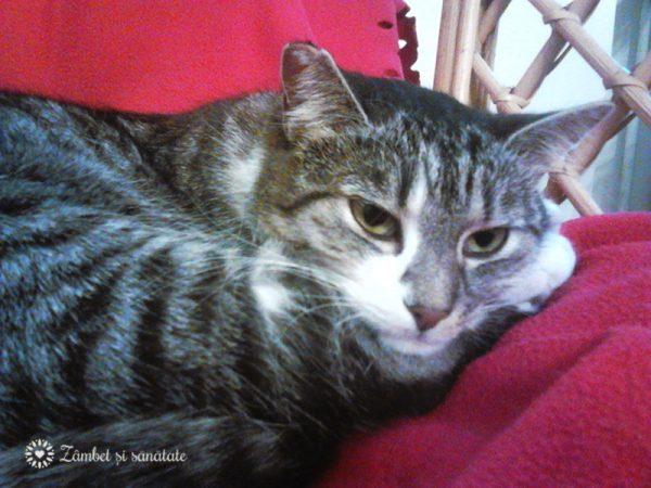 iris-pisica