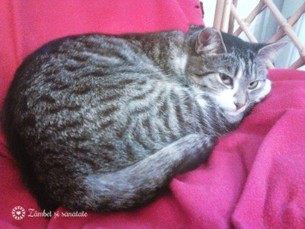 iris-pisica-rasfatata
