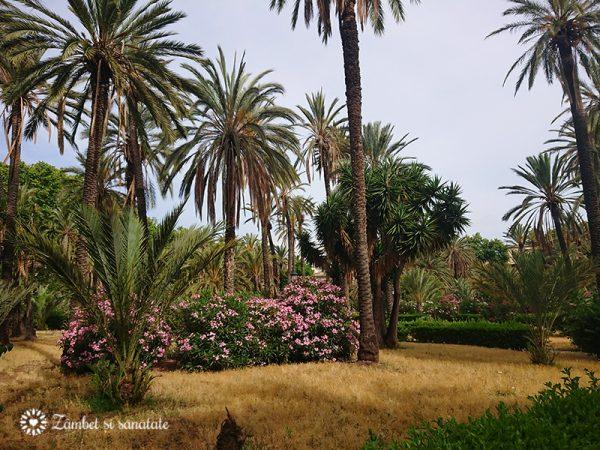 palermo palmieri