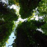 Moment de respiro în Parcul Dendrologic Bazoș