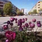 Gânduri optimiste la început de primăvară