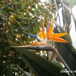 floare-exotica-gradina-botanica-munchen