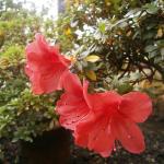 flori-delicate-gradina-botanica-munchen