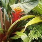 gradina-botanica-munchen-floare