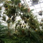 gradina-botanica-munchen-plante-ciudate