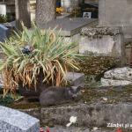 cimitirul-montmartre-paris-pisic-camuflat