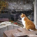 motan-cimitirul-montmartre-paris